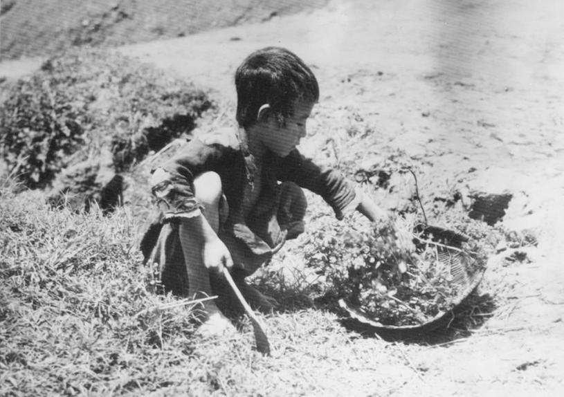 Great Chinese Famine (1958–1961)