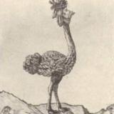 1780s-Antoinette-som-en-ostrich.jpg