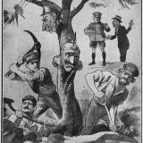 1918-the-doomed-tree-australia